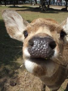 määkin syön sun kameran