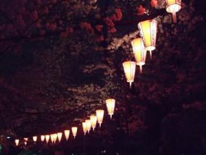 Kirsikankukat ja lyhdyt Uenon puistossa